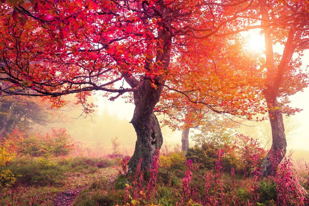 Seasons Autumn Trees Nature wallpaper