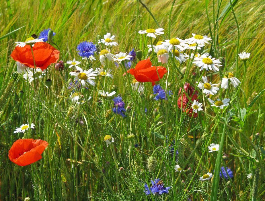 flowers field grass close-up wallpaper