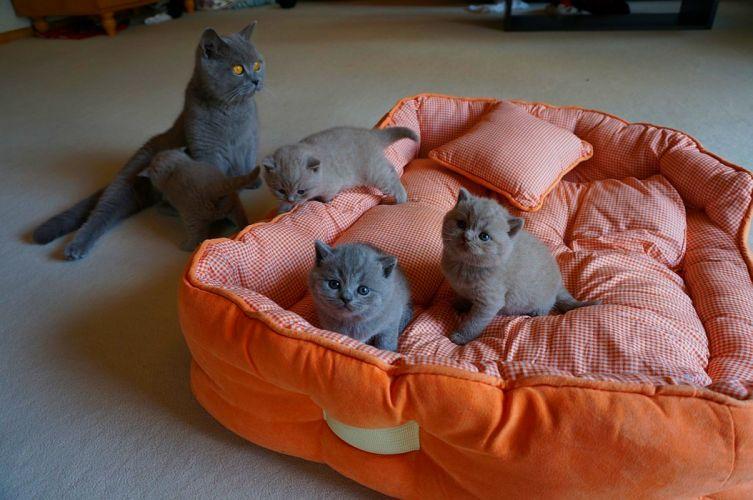 kitties cat wallpaper