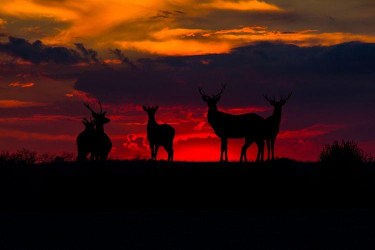 deer Bloody Sunset silhouettes wallpaper