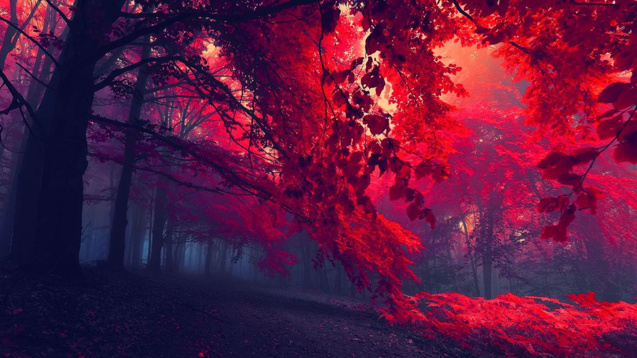 forest autumn trees fog red dark beautiful amazing wallpaper