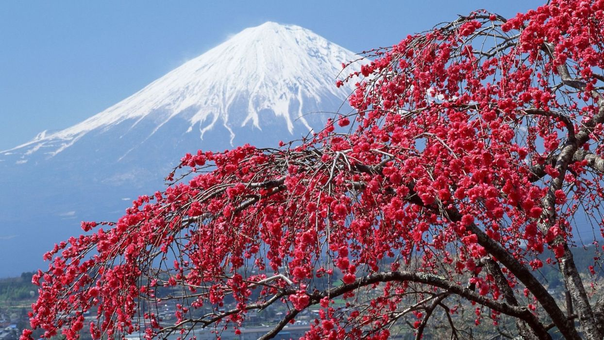 Mountain Snow Flowers Beautiful Red Tree Wallpaper 1920x1080
