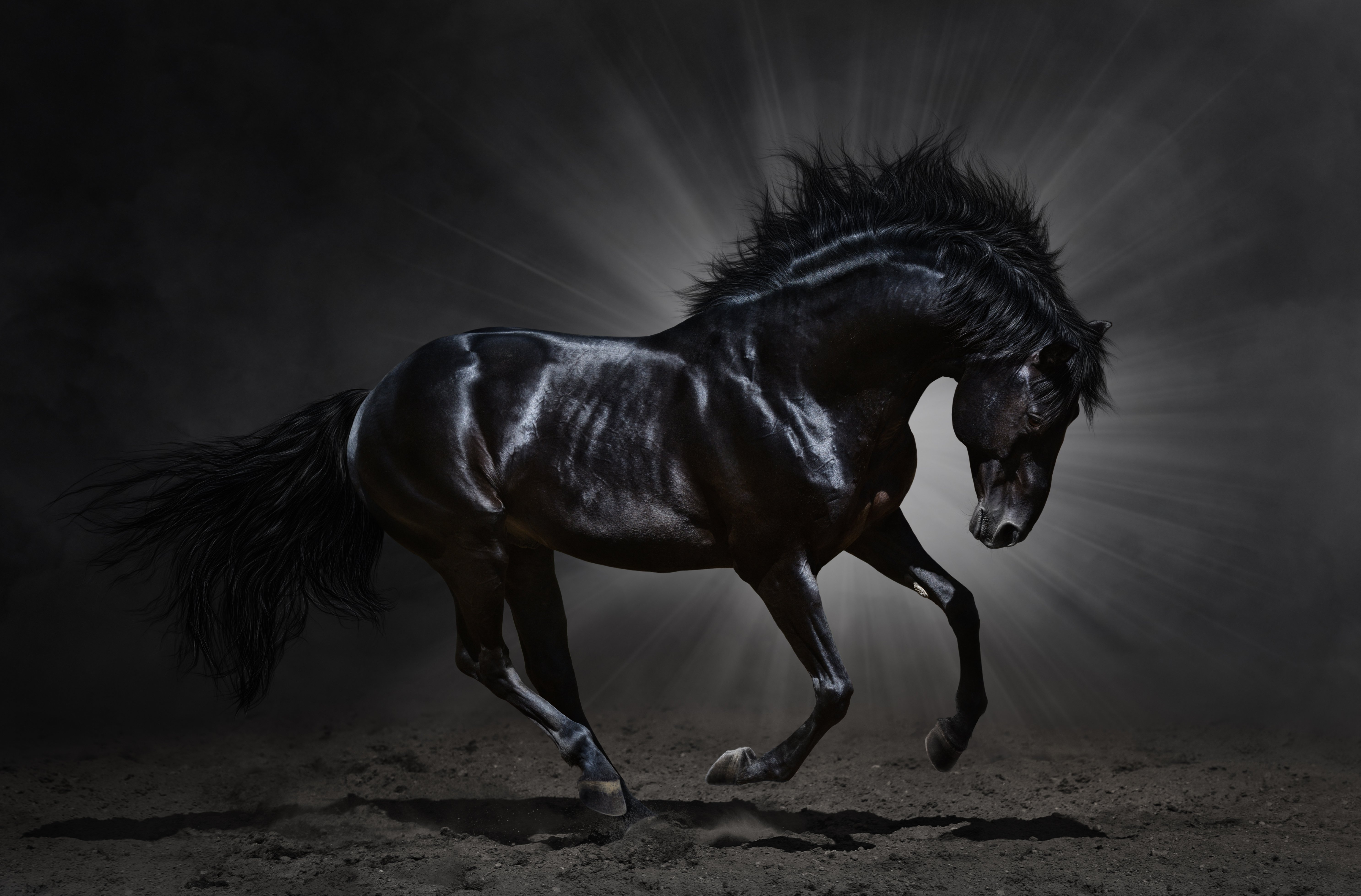 Black horses running at night - photo#24