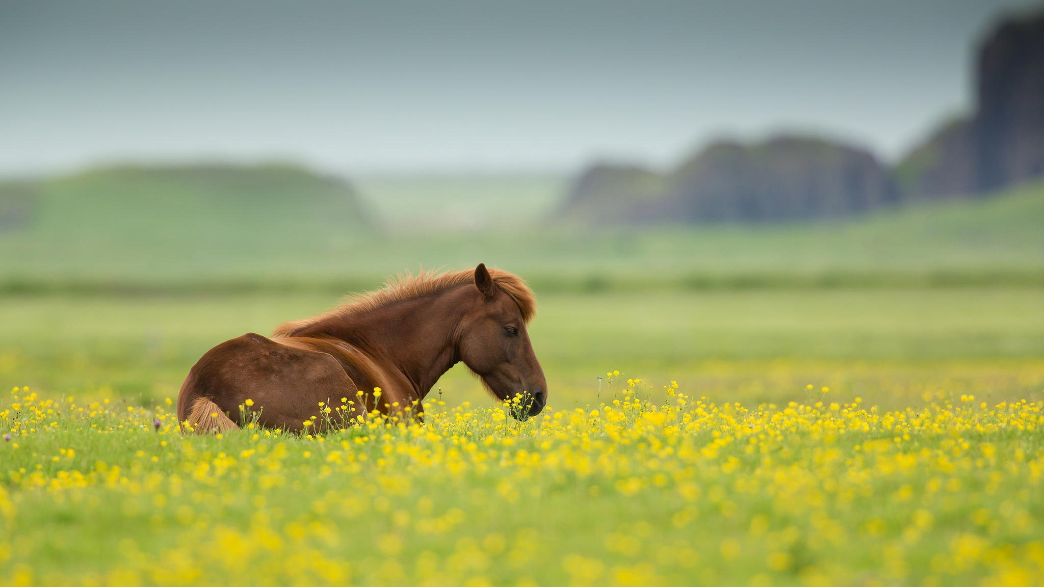 Horse Nature Animal Field Summer Flowers Wallpaper