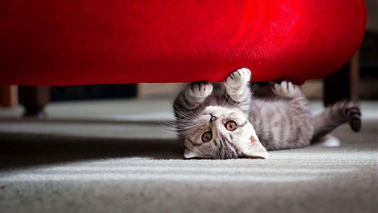 cute little cat wallpaper