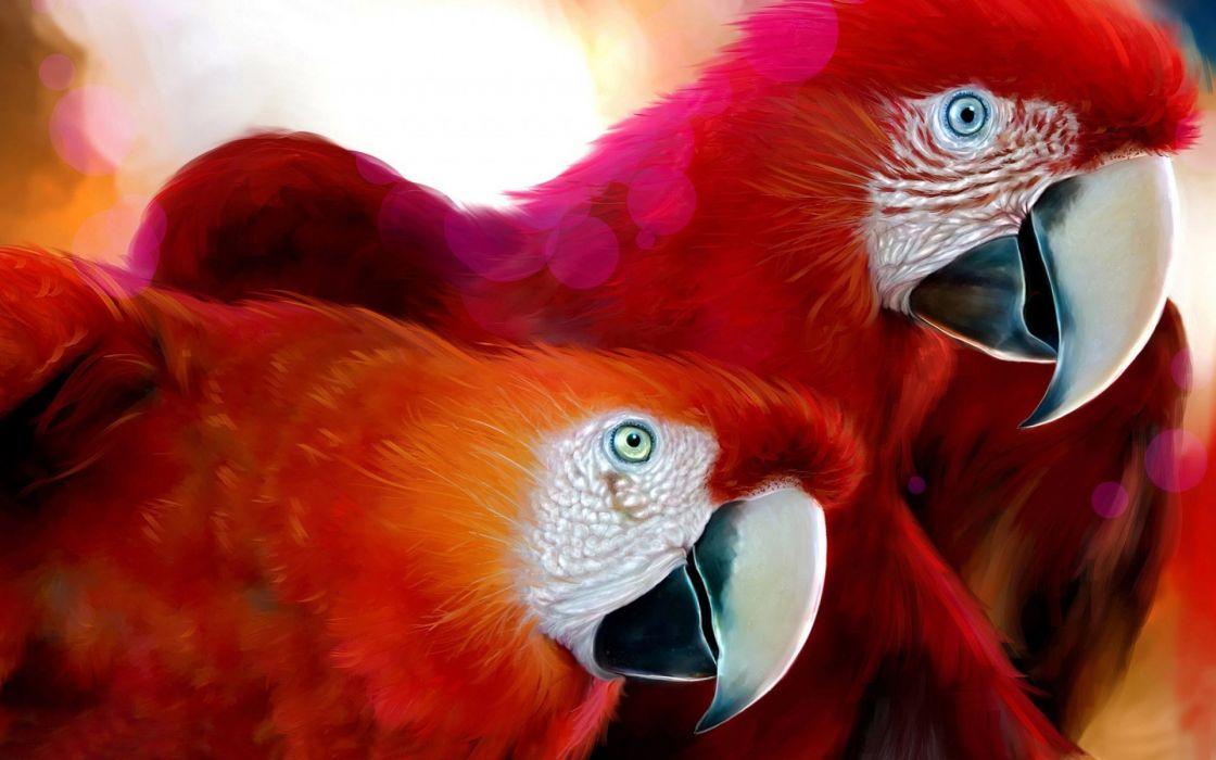 parrots wallpaper