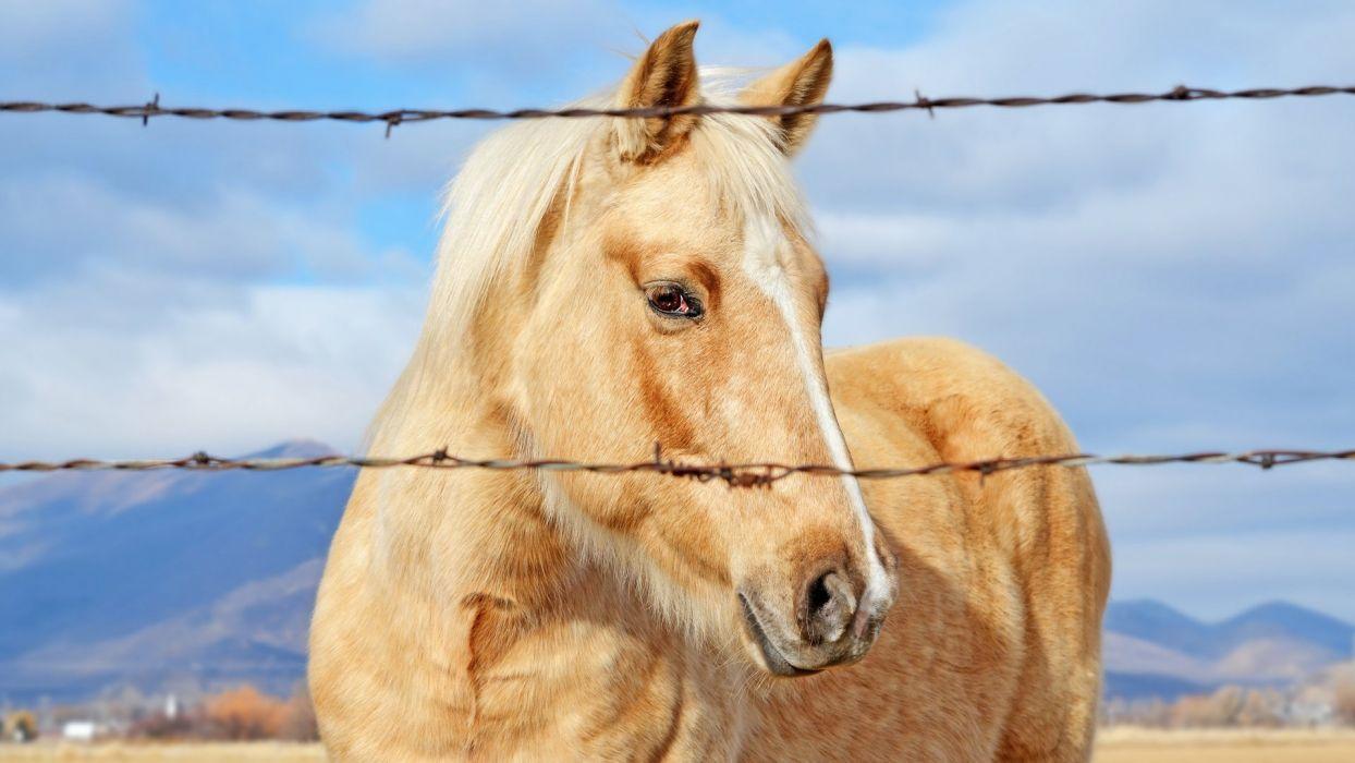 best horse wallpaper