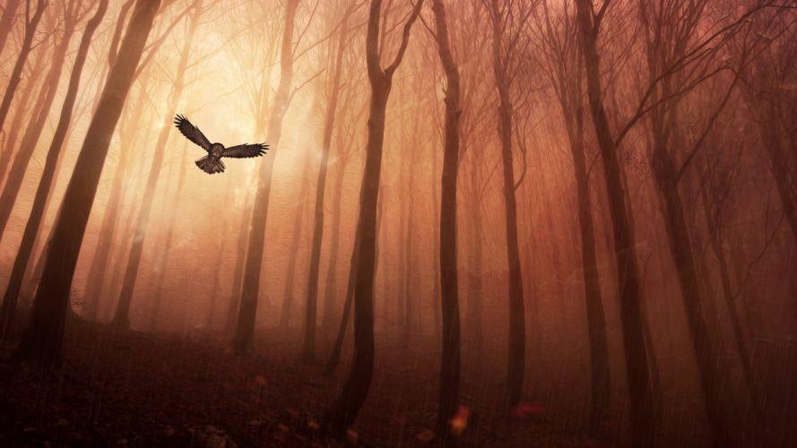 owl forest wallpaper