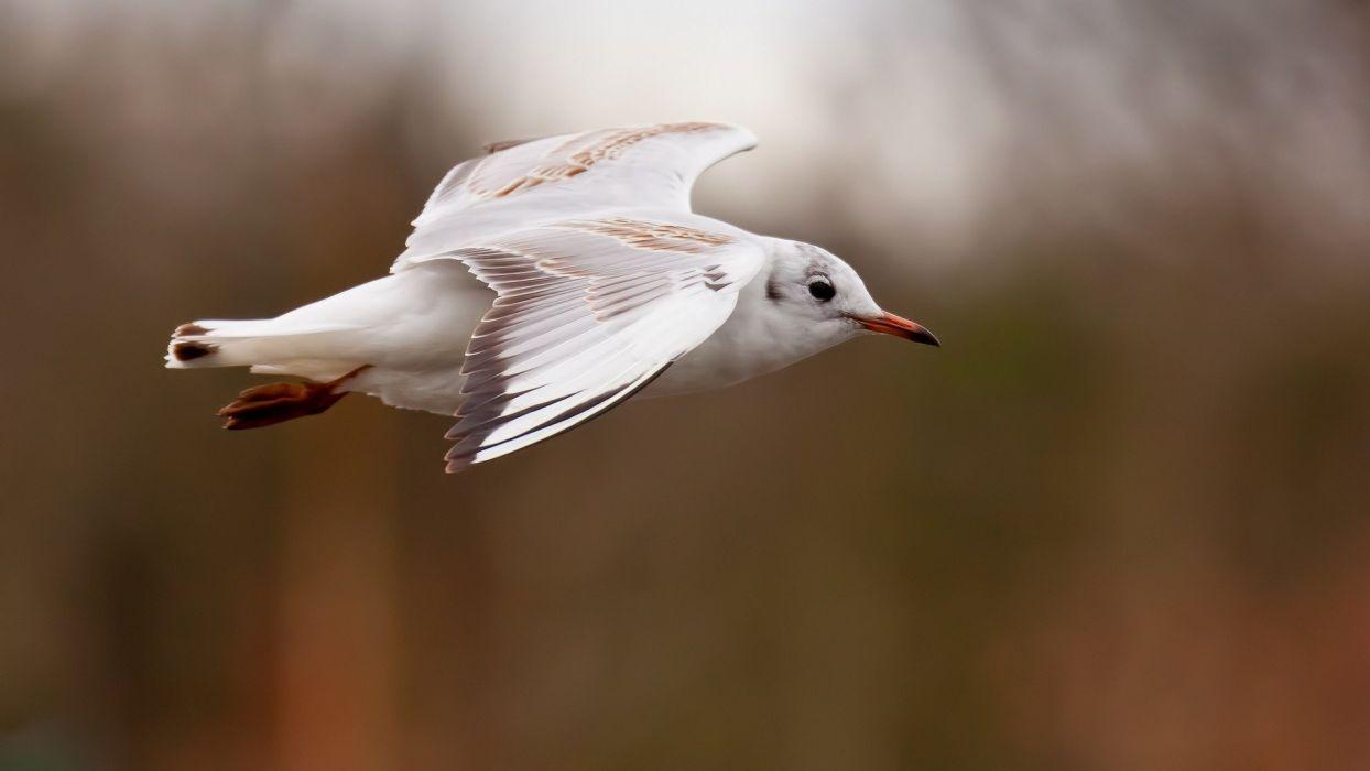 animal bird white fly wallpaper
