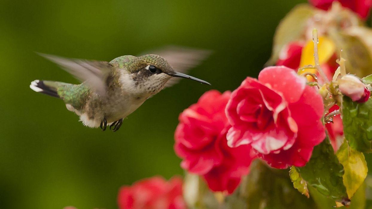 animal bird flower wallpaper