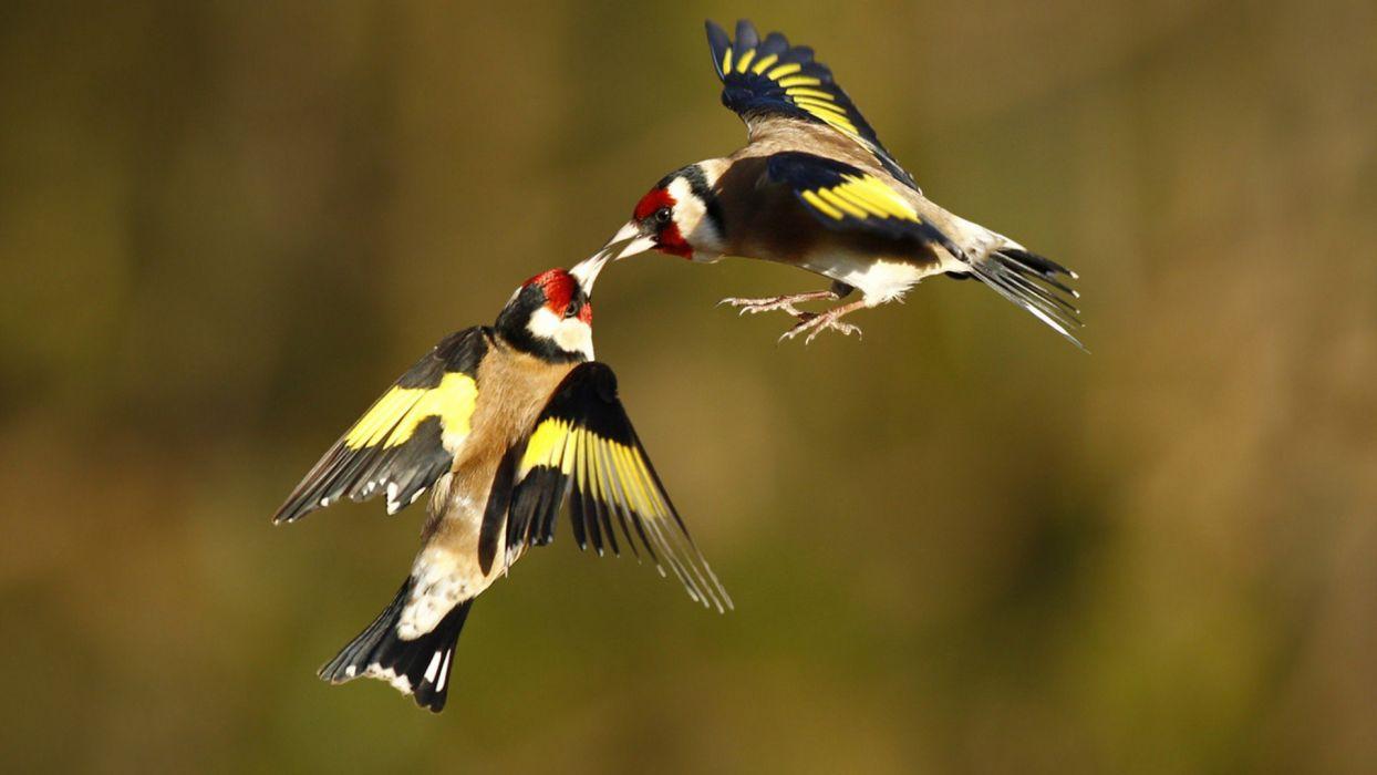 animal birds wallpaper