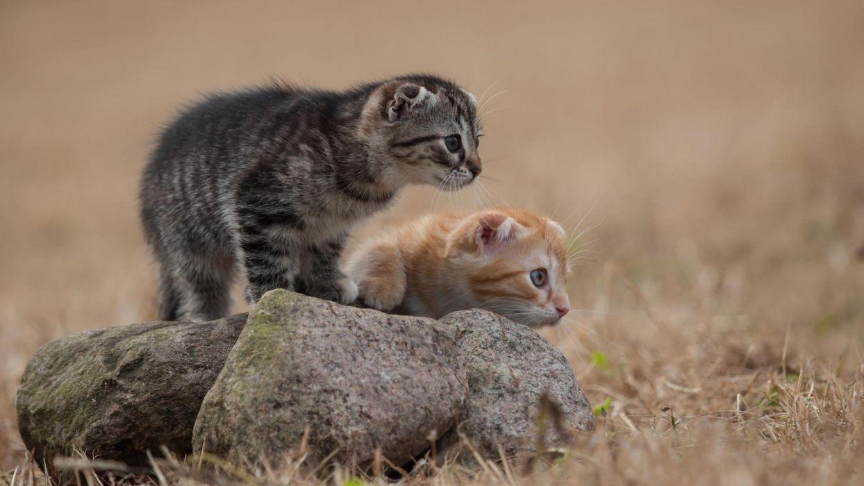 animal cat wallpaper