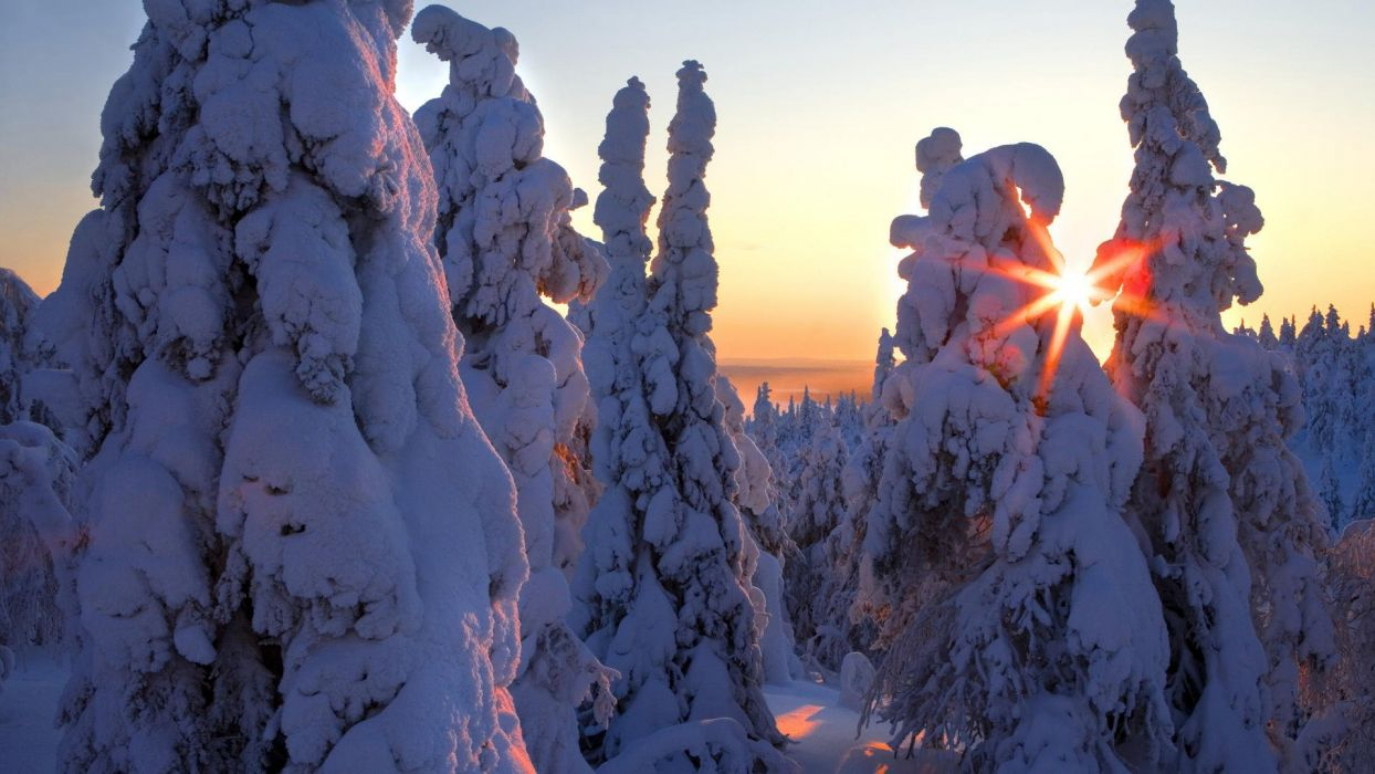 Winter HD Wallpaper wallpaper