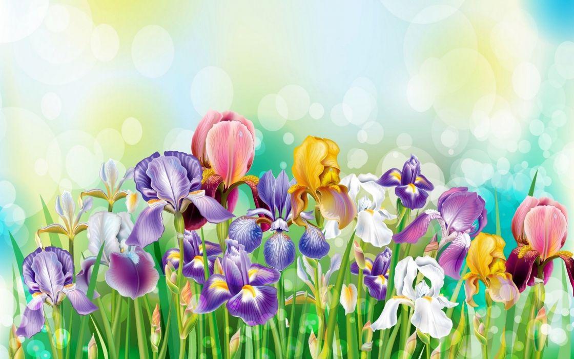bouquet Flowers Irises wallpaper