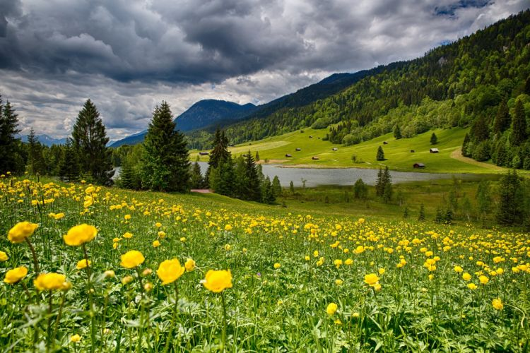 Bavaria Germany Bayern Germany meadow Flowers lake forest valley landscape wallpaper
