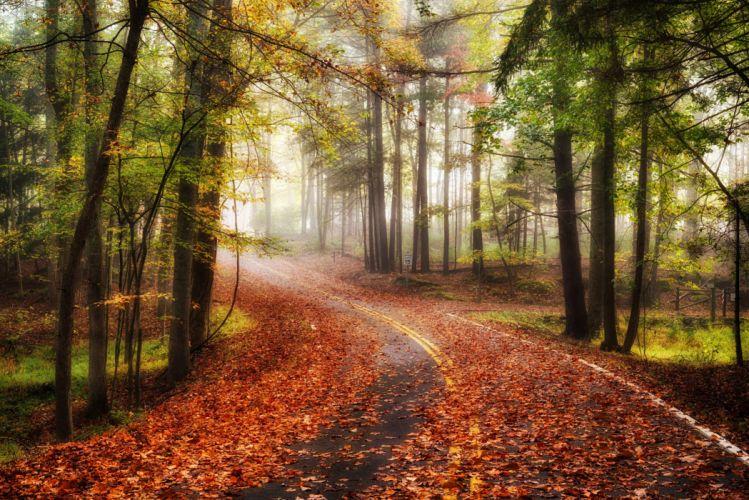 autumn road forest trees fog landscape wallpaper