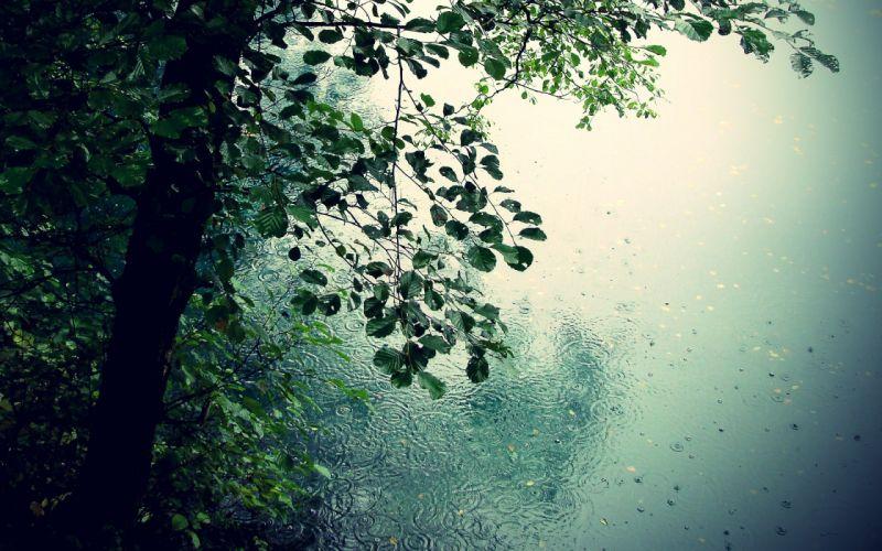 nature Trees rain romance puddles drops leaves wallpaper