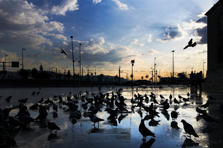 istanbul yeni camii turkey birds Pigeons blue sky cloud wallpaper