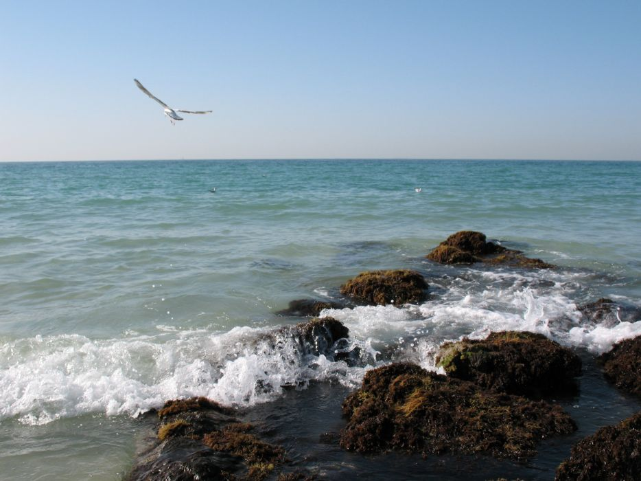 Emirates the sea persian gulf coast beach seagulls wallpaper