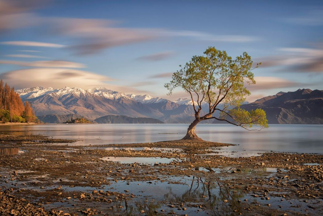 lake wanaka new zealand tree autumn wallpaper