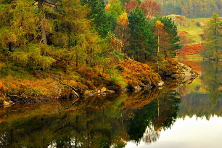 lake forest autumn Lake District reflection England Lake District Cumbria wallpaper