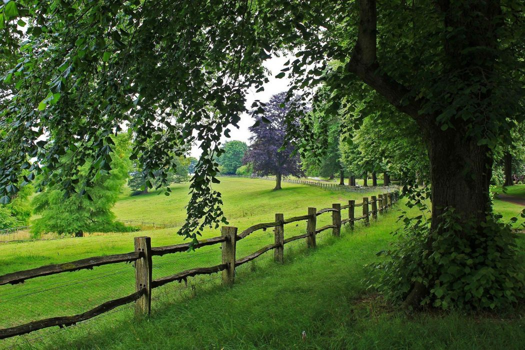 tree view trees nature path road scenery walk landscape fence wallpaper
