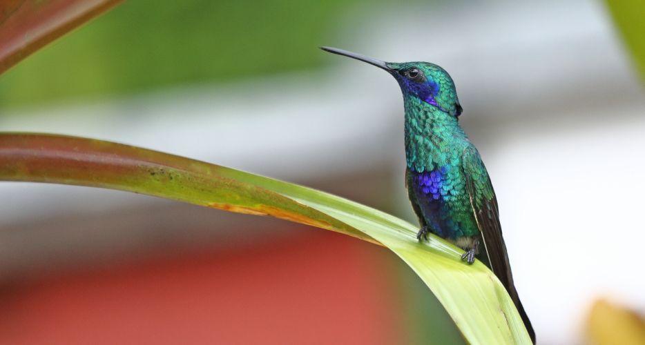bird sparkling hummingbird wallpaper