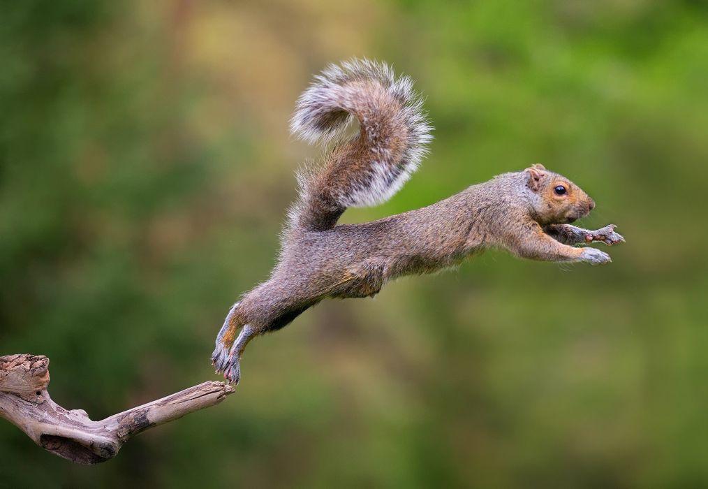 squirrel flying wallpaper