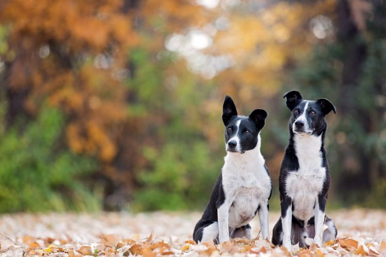 leaves two dog wallpaper
