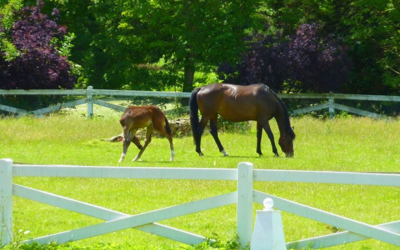 Horses horse horsebreed wallpaper