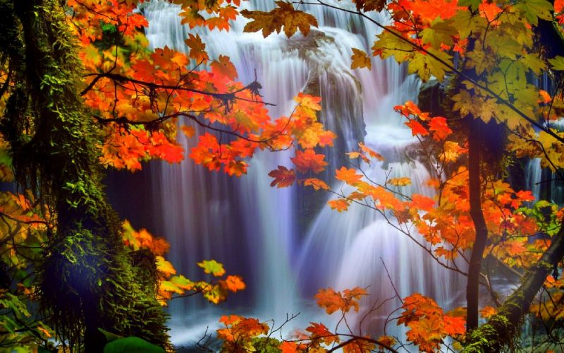 attractions in dreams trees nature fall leaves beautiful waterfalls scenery love four seasons creative pre-made colors stunning falls landscapes autumn wallpaper