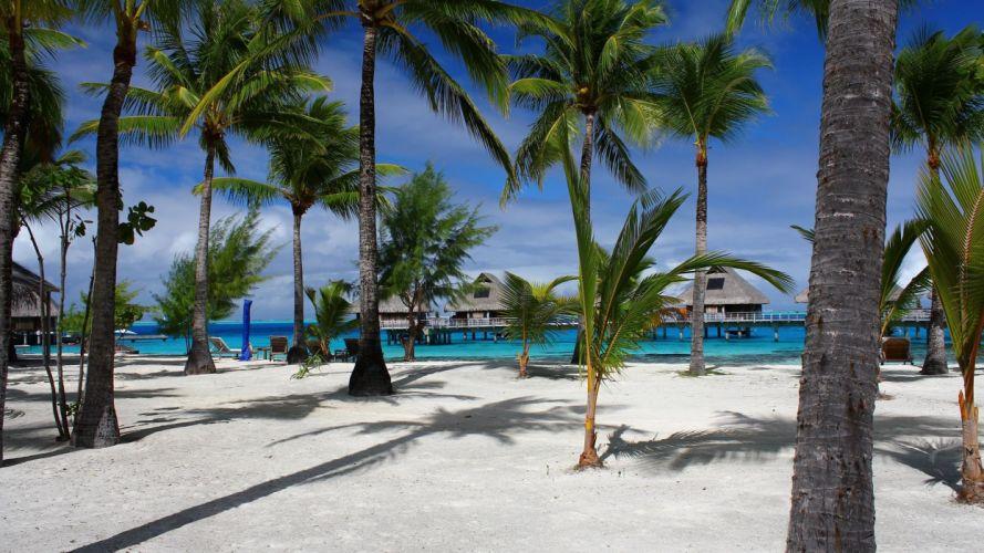 sea beach palms blue sky nature wallpaper