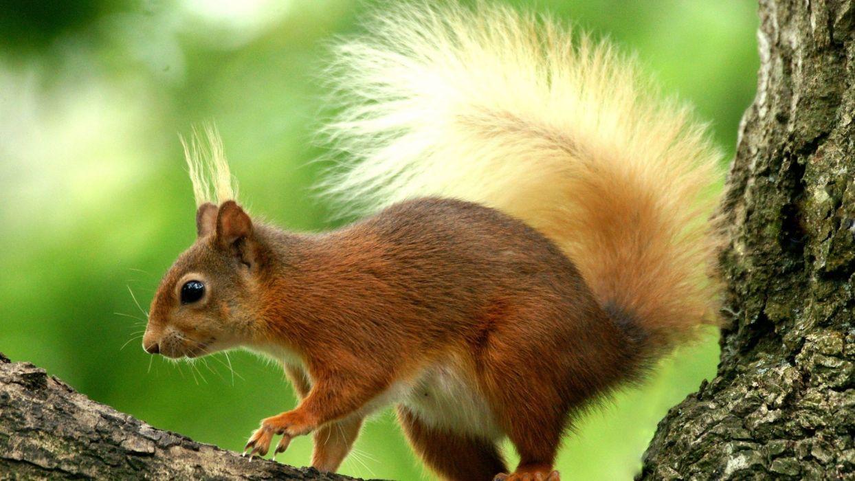 animal squirrel cute wallpaper