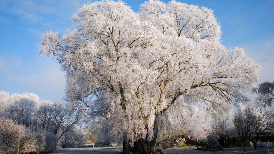 nature tree winter snow wallpaper