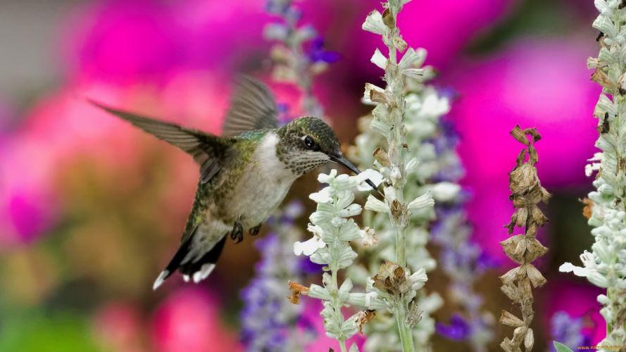 bird animal wings wallpaper