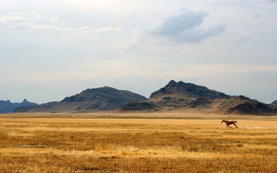 horse hills steppe sky mountain free wallpaper
