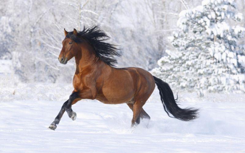 horse snow winter wallpaper