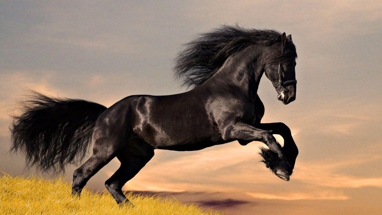 horse jump horse wallpaper