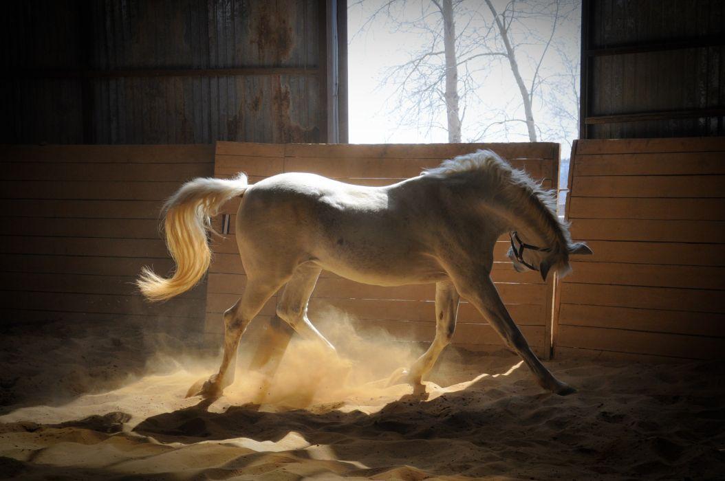 horse White paddock rays of the sun sand wallpaper