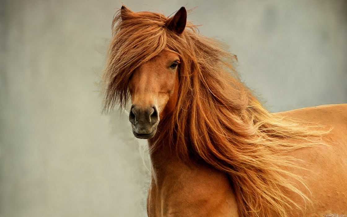 horse nature beauty wallpaper