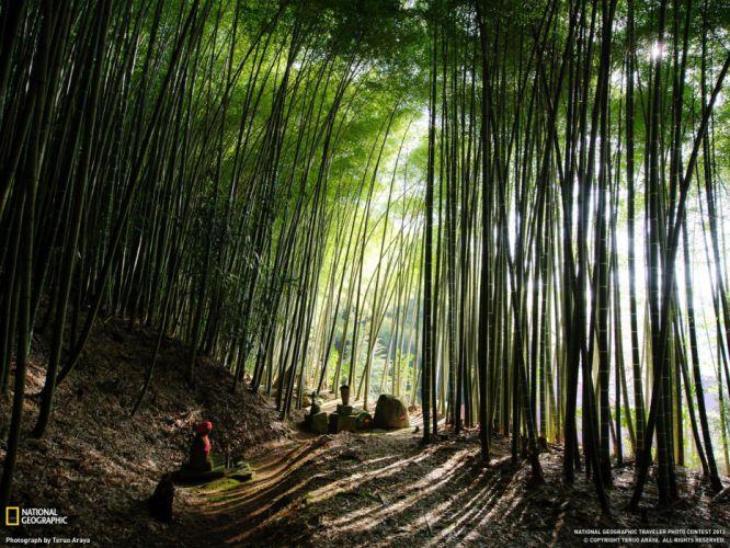 Bamboo Forest Japan wallpaper