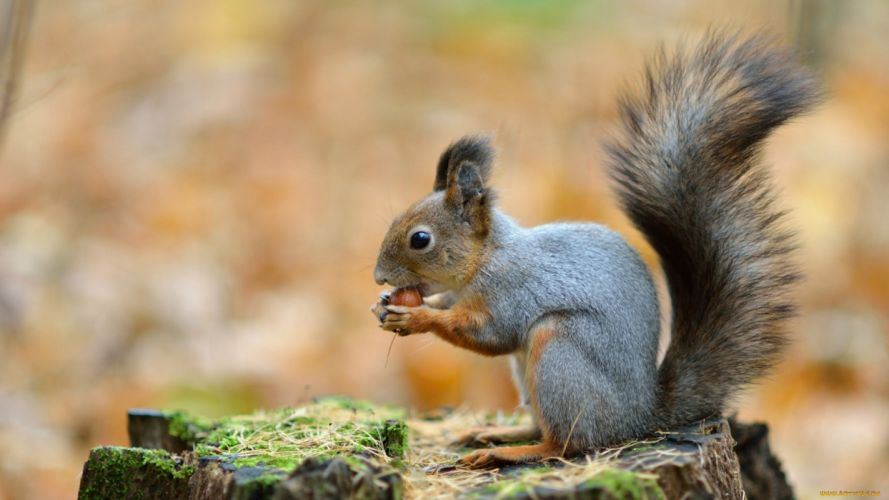 squirrel animal cute wallpaper