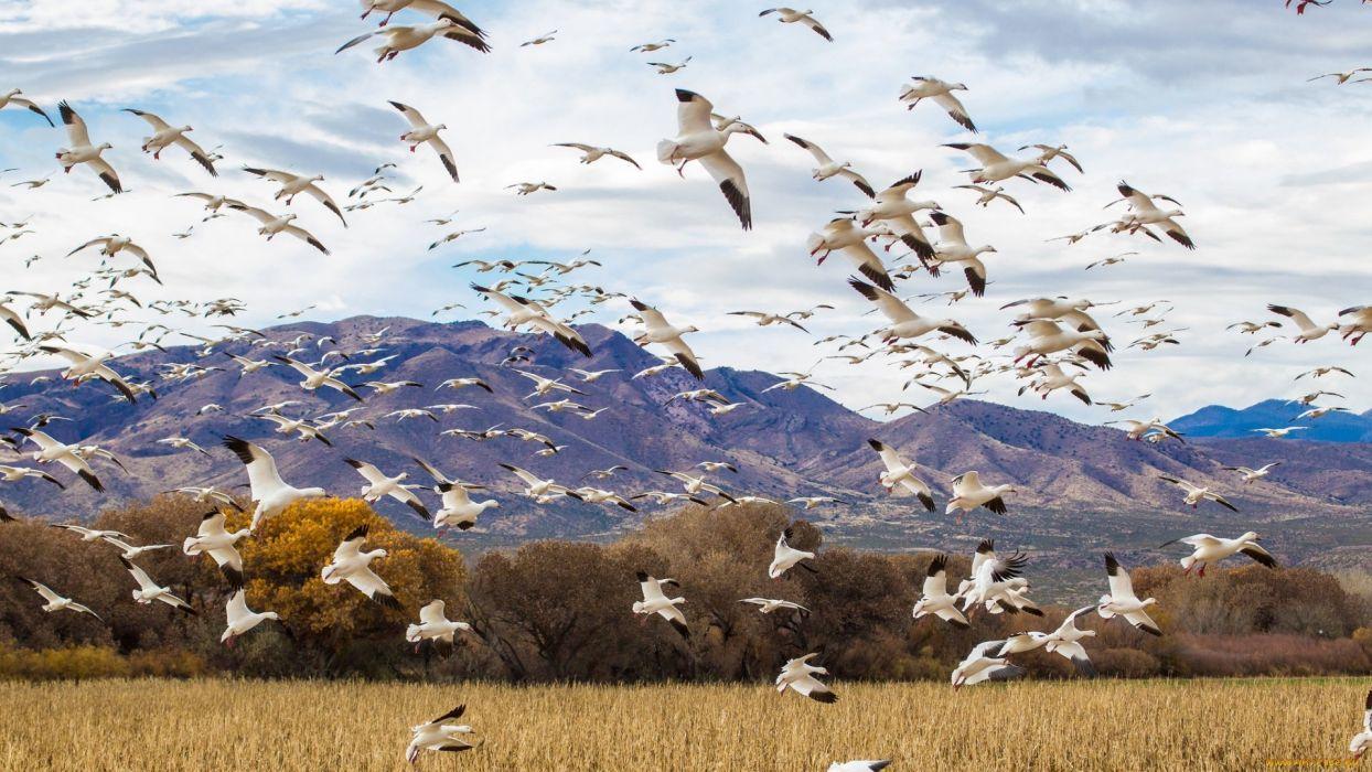 birds wild animals wallpaper