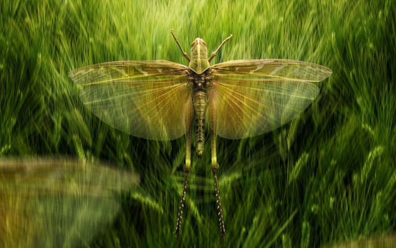 insect wings animal wallpaper