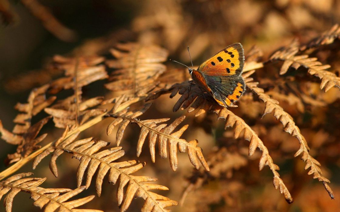 butterfly insect animal wallpaper