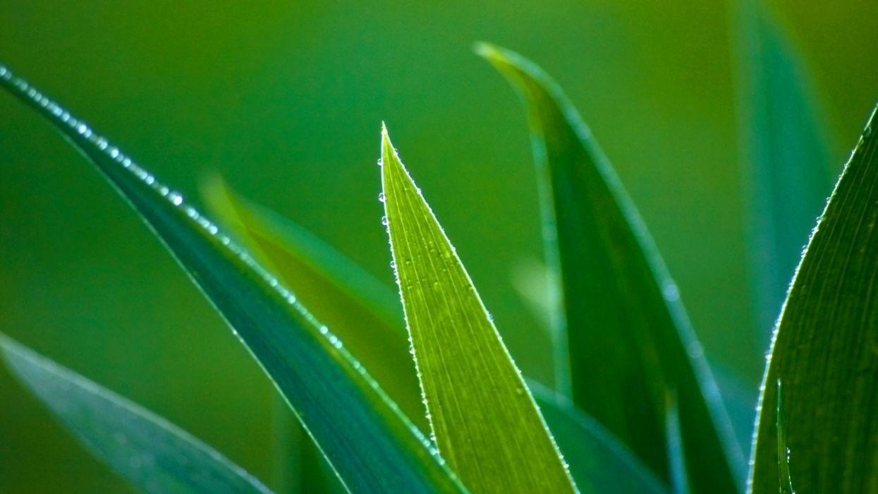 leaves nature green macro wallpaper