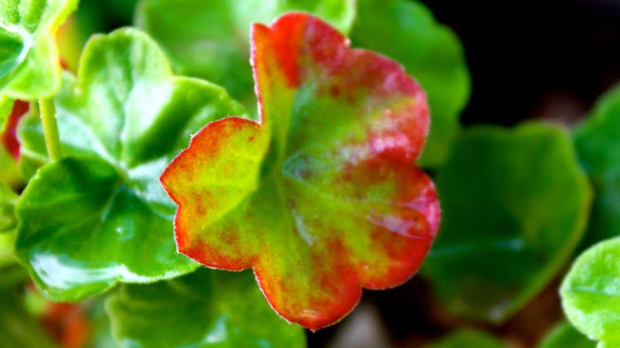 leaves flower green wallpaper