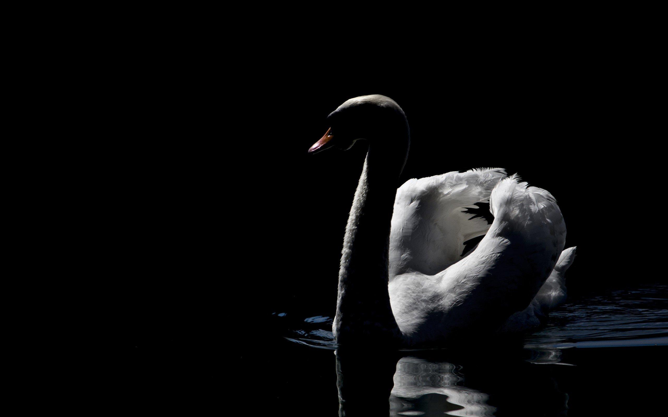 Черный стеклянный лебедь  № 3137135  скачать