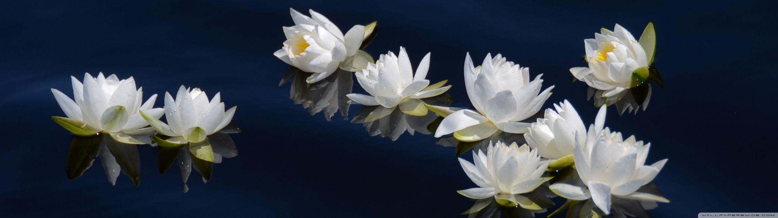 dual monitor screen multi multiple fleur flower fleurs flowers blanc