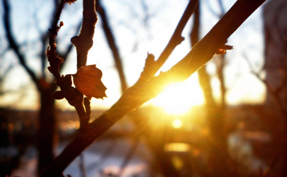 macro nature rays trees cool the sun branches sheet freshness sunset autumn wallpaper